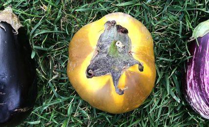 """frutta-e-verdura-""""bella-dentro"""":-un-progetto-che-combatte-gli-sprechi-ortofrutticoli"""