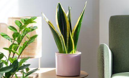 piante-e-fiori-antistress-per-arredare-l'home-office