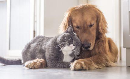 covid,-cani-e-gatti-vanno-vaccinati?-il-parere-degi-esperti