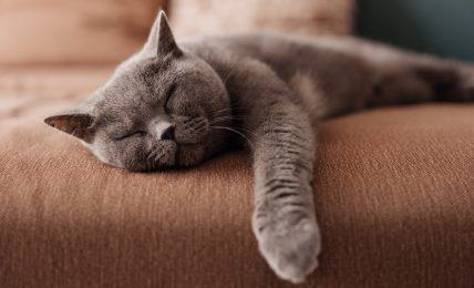 interior-design-pet-friendly:-gli-arredi-a-prova-di-animali-domestici