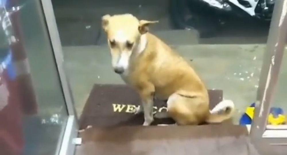 un-gesto-d'amore-non-necessita-tante-spiegazioni:-cane-randagio-trova-un-nuovo-amico-–-video