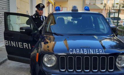 scanzano-jonico,-i-carabinieri-forestali-sequestrano-un-allevamento-abusivo