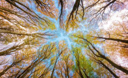 """gocce-di-laboccetta:-climate-change,-""""daje-de-alberi"""""""