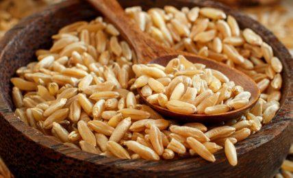 il-kamut-(o-grano-khorasan)-contiene-glutine?-origini,-caratteristiche-e-curiosita-su-questo-cereale-antico