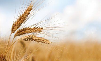 """agricoltura,-mipaaf-avanti-sul-""""granaio-italia""""-dopo-il-tavolo-di-filiera"""