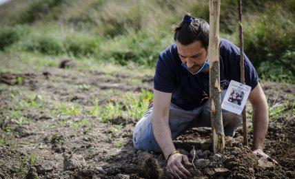 """a-cerignola-(fg):-""""pietra-di-scarto""""-e-""""zeroco2""""-insieme-per-piantare-alberi-ad-alto-impatto-sociale"""