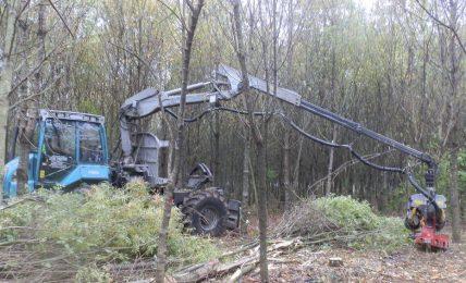 partenza-anticipata-dei-cantieri-forestali-in-basilicata