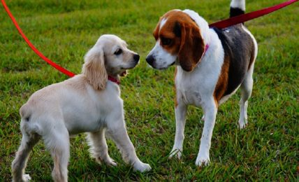 terza-giornata-a-senise-dedicata-al-microchip-per-i-cani