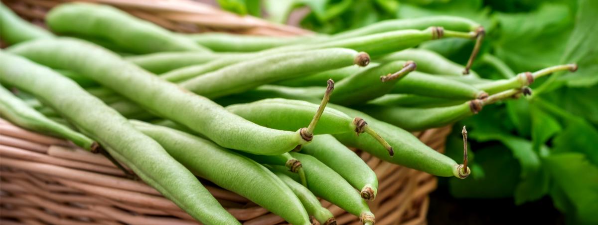 fagiolini,-legumi-depurativi-e-ricchi-di-fibre