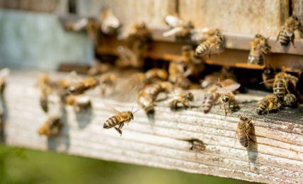 """""""ogni-ape-conta"""":-il-progetto-di-monitoraggio-di-coop-con-l'unibo-per-difendere-la-biodiversita"""